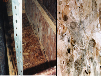 Mold on particle board